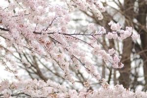 20150407_z_cm_taiki_noguchi_12